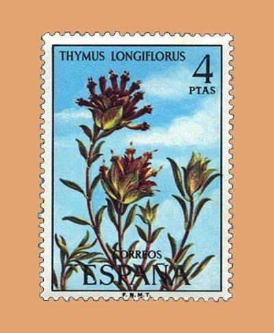 Edifil 2222. Thymus Longiflorus. Sello 4 pts. **1974